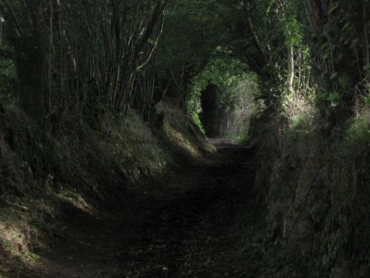 Path to Wonsom