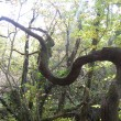 woodland, Teign valley