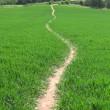 Footpath at Nynehead