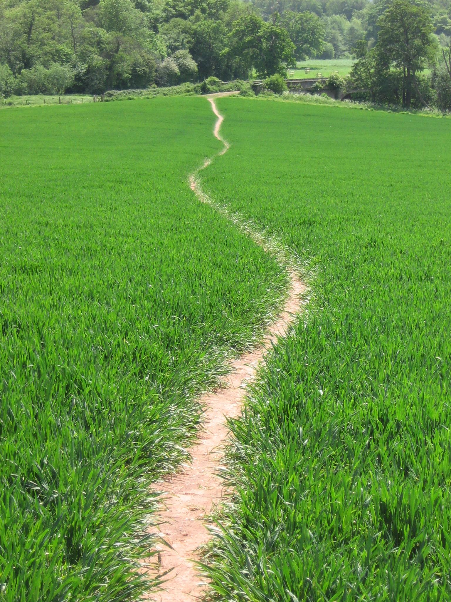 Footpath at Nynehead | Media | Mary Michael Pilgrims Way