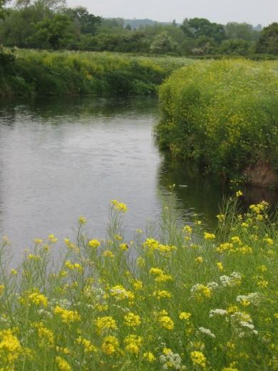 Riverbank at Ham