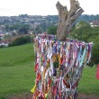 Glastonbury Thorn after being vandalised