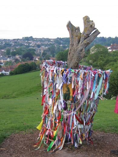 Glastonbury Thorn after being vandalised