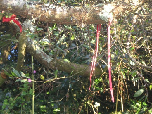 Ribbons adorning the blackthorn overhanging Alsia Well