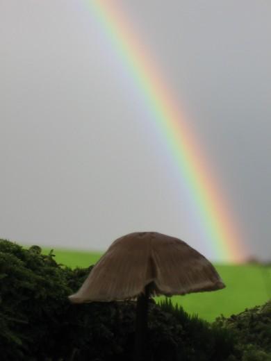 Rainbow near Lanlivery
