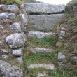 Path towards Luxylan