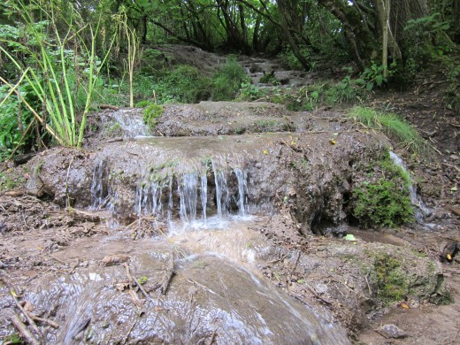Tufa spring near Coleford